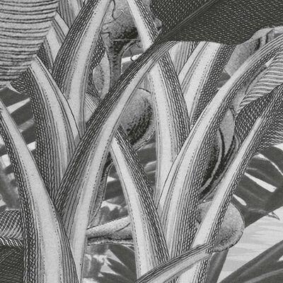 Komar Fototapete Amazonia Schwarz und Weiß 400x250 cm